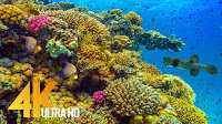 Amazing Underwater World of the Red Sea - 4K Relaxation Video with Calming Music - 3 HOUR - Part #1