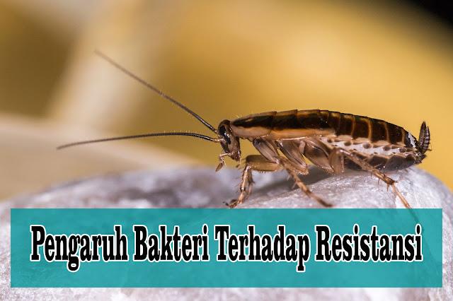 Pengaruh Struktur Bakteri Terhadap Resistansi