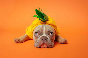Can dogs eat pineapple, Can dogs have pineapple