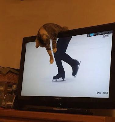 Katze auf dem Fernseher lustig