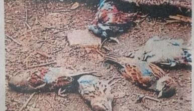 मंदसौर में 400 से अधिक पक्षियों की मौत के बाद विभाग ने  किया अलर्ट जारी, पशुपालन विभाग पूरे जिले को आठ भागों में बांट कर रखेगा बर्ड फ्लू पर नजर