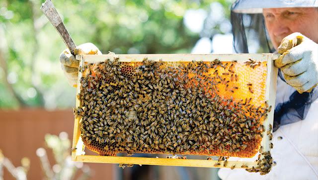 Έλεγχος μελισσιών το φθινόπωρο τι πρέπει να προσέξω;