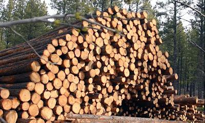 वन संरक्षण के उपाय