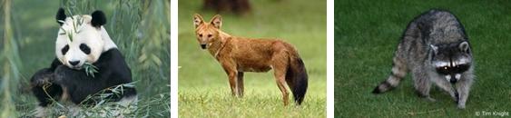 hewan hutan gugur, Ekosistem Darat Dan 6 Bioma