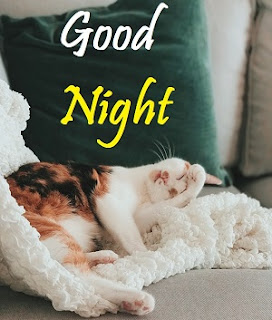 good night cute sweet cat images