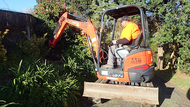 Two men and a digger moving a couple of big camellias and some small ones from the driveway.