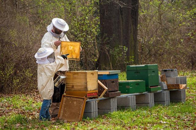 Beekeeping Apiculture Types of HoneyBee Honey Bee Scientific name apiculture meaning