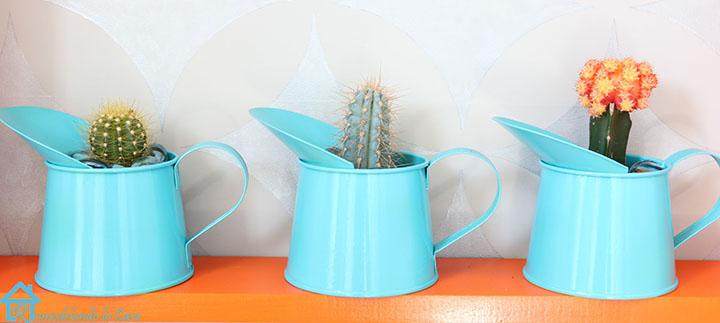 Cactuses on shelf