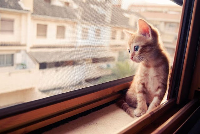 15+ Cats Desperately Waiting For Their Humans To Return