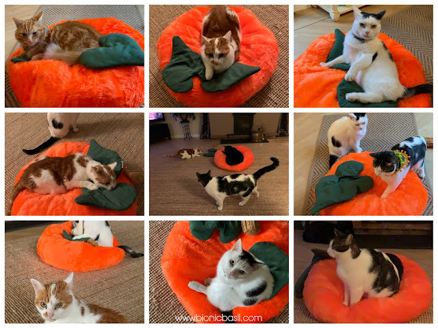 The Pumpkin Pouffe with Catnip Leaves and Kicker Stalk Creepy Crafting with Cats ©BionicBasil®Halloween Special catnip stalk WHO LOVES THE PUMPKIN