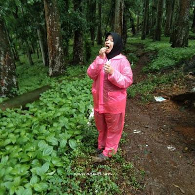menikmati langsung daun pohpohan sumber pangan dari hutan
