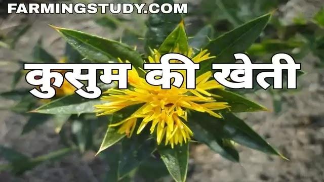 कुसुम की खेती कैसे की जाती है, kusum ki kheti, safflower in hindi, kusum ki fasal, कुसुम कोन सी फसल होती है, कुसुम की खेती के फायदे, कुसुम की किस्में,
