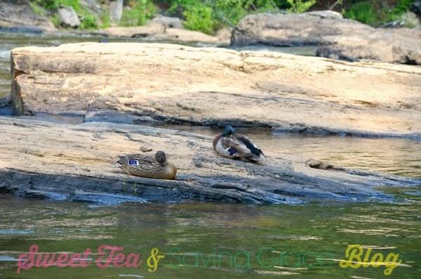 Sweetwater Creek - www.sweetteaandsavinggraceblog.com