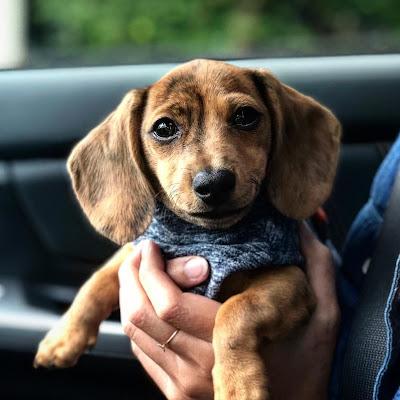 most loving dog breeds