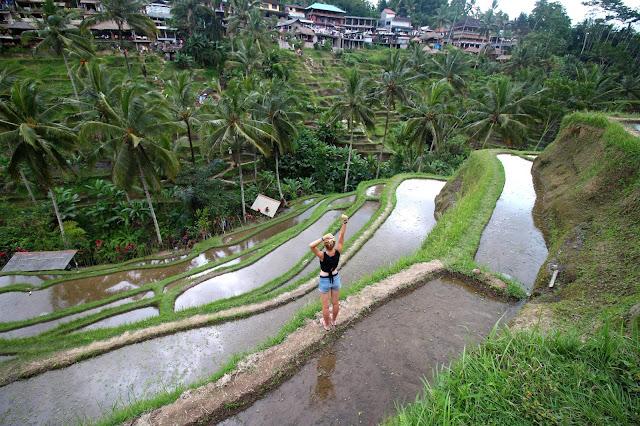 Rizière Tegalalang Ubi Bali