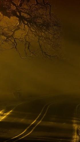 Con đường sương mù