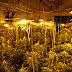 Desmontan tres laboratorios clandestinos de marihuana en Yuncler, Bargas y Olías del Rey