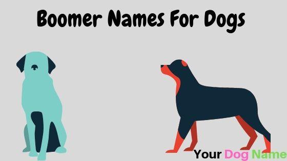 Boomer Dog Names