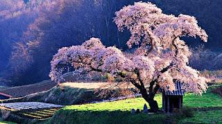 ağaç sevgisi kompozisyon