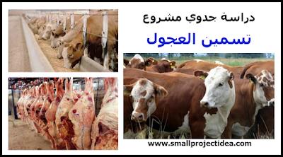 افكار مشاريع  – مشروع تربية وتسمين العجول البقري و تحقيق ربح خيالي