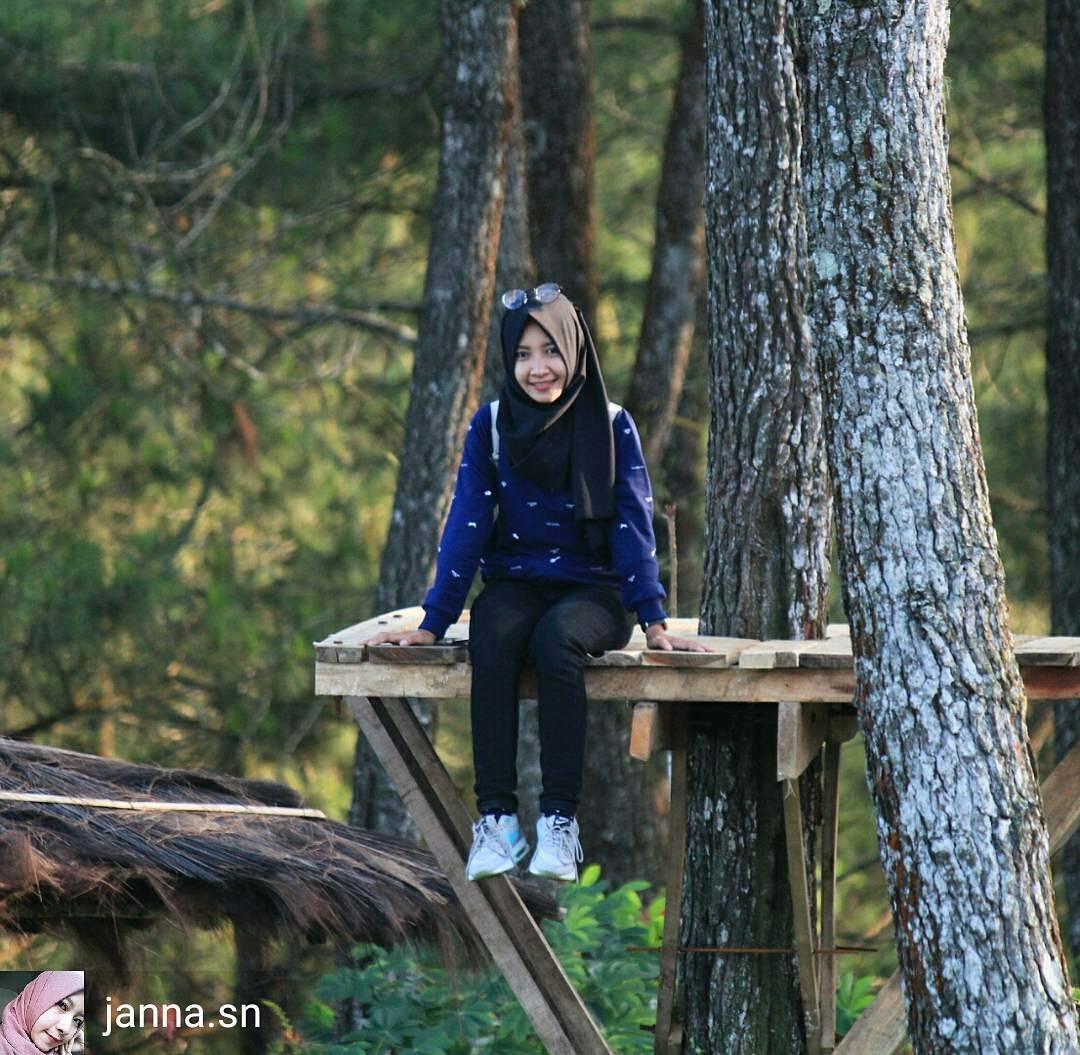 Wisata Alam Hutan Pinus Kalilo Purworejo Yang Menjadi