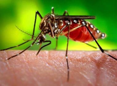 Casos suspeitos de dengue na Bahia crescem 460% nos cinco primeiros meses de 2019