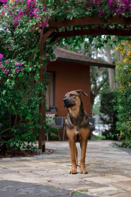 Fort Myers Pet Photographer