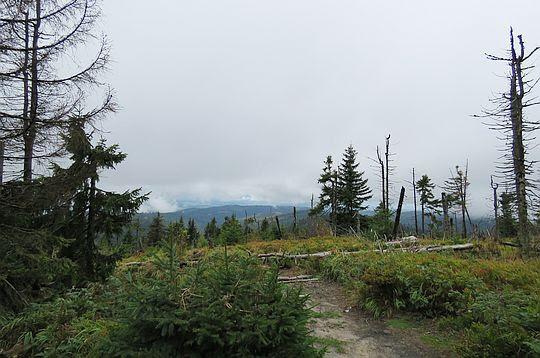 Widok ze szczytu Turbacza - czerwony szlak do Rabki-Zdroju.
