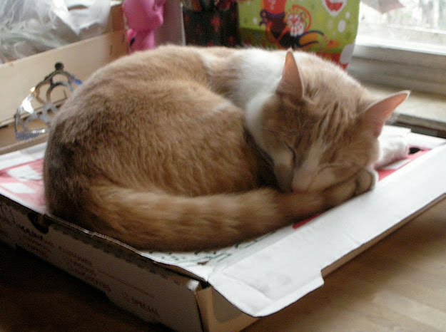 Cats Love Pizza Boxes Damn Cool Pictures