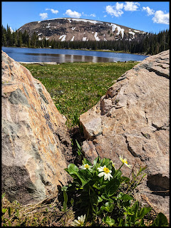 White Marsh Marigold and Moose Horn Lake