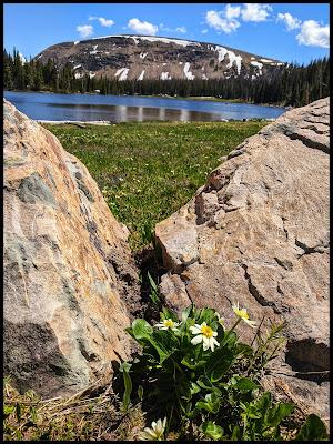 White Marsh Marigold and Moose Horn Lake