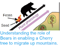http://sciencythoughts.blogspot.com/2016/04/understanding-role-of-bears-in-enabling.html