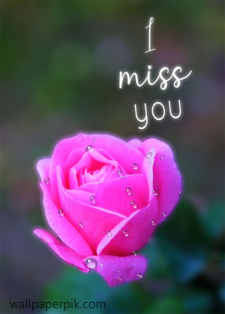 i miss you image photo rose pink flower for girlfriend