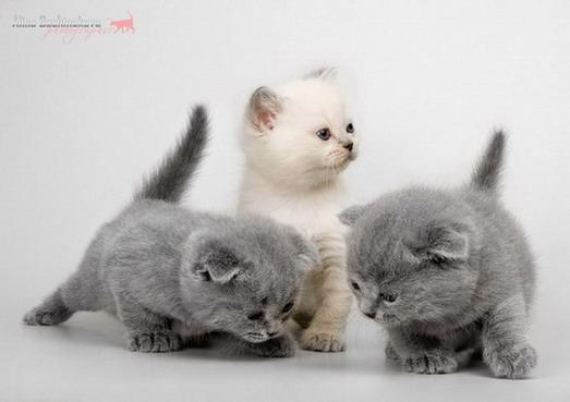 Gatitos Bonitos: Gatitos Animados