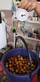 7.5kg of fruit