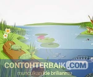 Contoh Ekosistem
