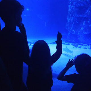 Autistic and neurotypical kids at the aquarium