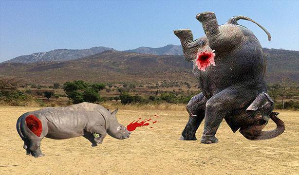 The Battle Between Rhino Attack With Elephant In Forest Whose Will Win After Finish They Try To By Bull Each Other