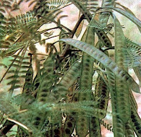 Herbal Leaves Herbal Medicine Plants And Treatments May