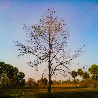 Tall tree | field | dry leaf