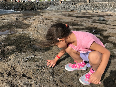 Child playing with fossils on a rocky beach