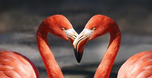 burung flamingo pink, arti simbol burung flamingo, makna simbol burung flamingo