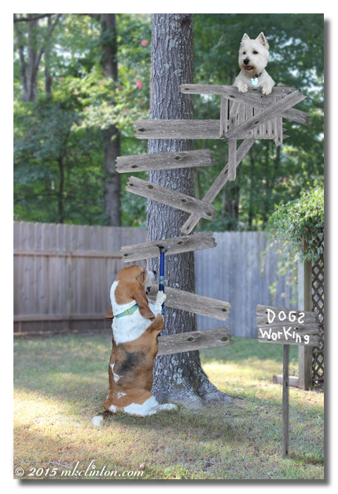 Bentley Basset Hound building a squirrel stand on a tree with Pierre Westie trying it.