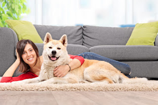 Έξυπνες κινήσεις για να δημιουργήσετε το απόλυτα pet friendly σπίτι