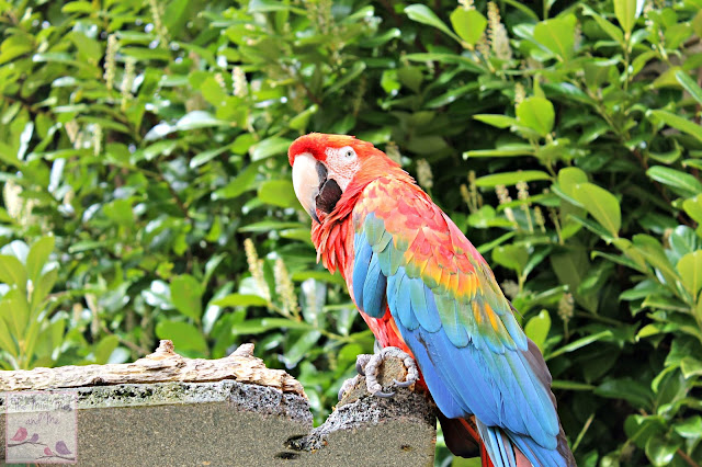 Wildlife and Dinosaur Park Devon - parrot
