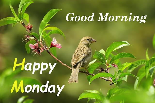 Good Morning Ram Ram Ji Flower