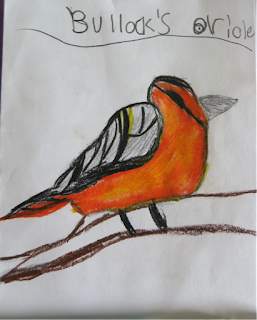 student drawing of a Bullock's Oriole