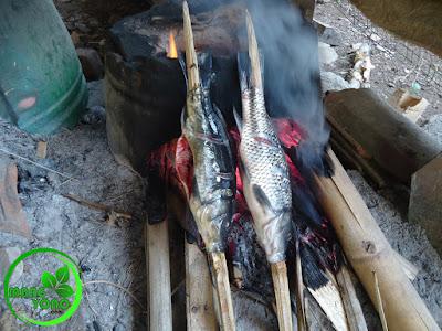 FOTO : Membakar / manggang Ikan mas di tungku hawu
