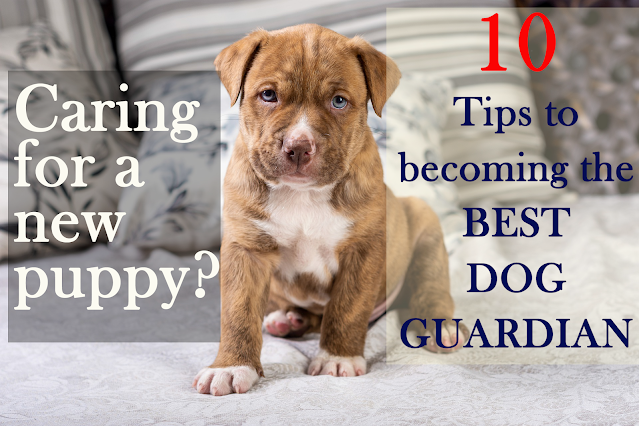 Caring for a new puppy? 10 tips to becoming an amazing dog guardian