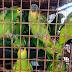 Campanha entrega voluntária de animais silvestres em Tamandaré